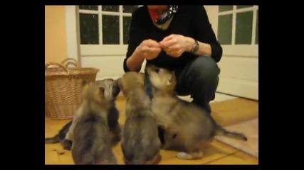 Жена храни вълчета в къщата си