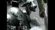 Ужасно!!! Огромна Анаконда атакува куче