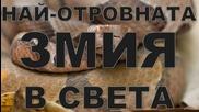 Най-отровната змия в света