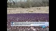 Жители на Аризона попаднаха на лилави извънземни яйца