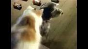 Куче и Котка Се обединяват срещу крадци