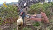 Spain: Police rescue animals after La Palma volcano eruption