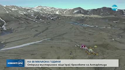 Откриха мистериозно яйце на 68 млн. години край бреговете на Антарктида