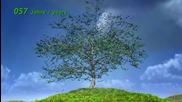 Как израства едно дърво? Анимация показваща растежа по години