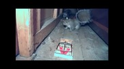 Squirrel Owned By Rat Trap