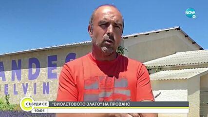 """Лавандинът: """"Виолетовото злато"""" на Прованс"""
