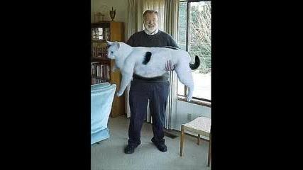 3 - минутен смях с котки !