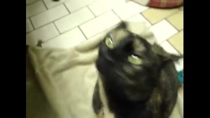 Котка издава странни звуци.