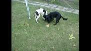 Кучета - Hardy &Lisa