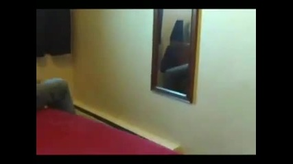 Котка се размазва - смях