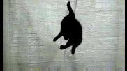 черно коте 3.08.2009 Dsci0040