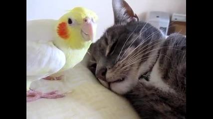 Това папагалче маи си няма друга работа