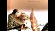 Песента на врабчето - Детска песничка