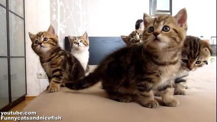 Малки Котенца В Синхрон..