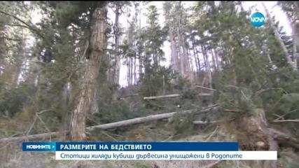 Снегът нанесе невиждани щети в Родопите