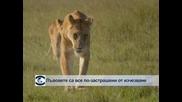 Бебе от рядък вид антилопа се роди в зоопарка в Мексико сити