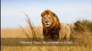 За Лъва с любов - стих, пожелание, зодии