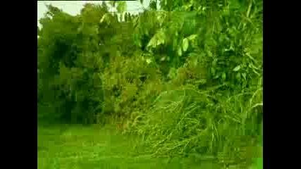Алигаторът Гали