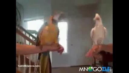 Луди папагали (смях)