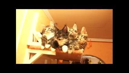 Ето така се хипнотизират котки!!!