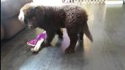 За един кратък момент това момиче се заблуди, че нейното кученце е добро момче