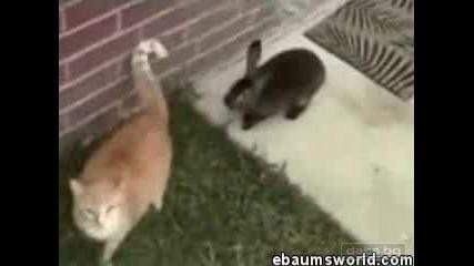 Заек Напада Котка