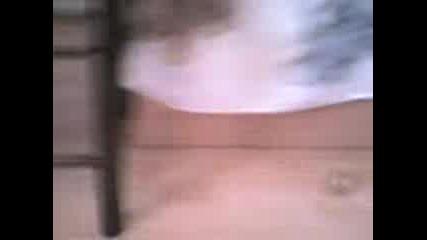 Моето Коте 2 :*
