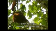 Маймуни Ревачи