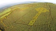 Ireland: Drone footage shows giant Celtic cross growing in Irish forest