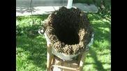 Аз Пчеличка Съм