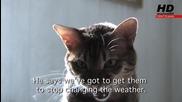 Котки срещу глобалното затопляне - marioni95 Hd