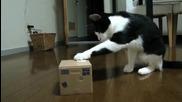 Минутка: Котка наркотрафикант!