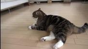 Дебелото коте мару .. Поспаланко