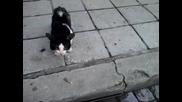 тая котка маи се опита да ми каже нещо :d