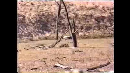 Лов - Диво Прасе