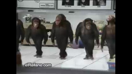 Хайде маймуните на хорото!