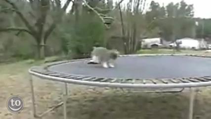 Няма такъв смях ! Животни скачат на батут ( трамплин )