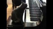Коте компузитор