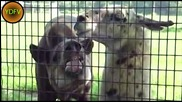 Смешни животни!!!