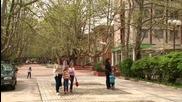 Вършец - булевардът с чинарите