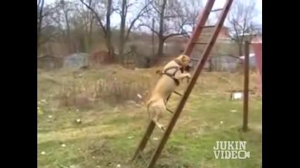 Куче паркурист
