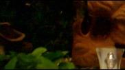 аквариумче