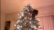 Коте се радва на Коледната елха, но после...