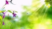 Yakuro - Добро утро,светло начало! ... (по стихове на Катя Йорданова) ... (painting) ...