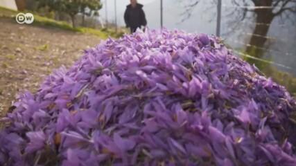 Най-добрият на света: тайната на швейцарския шафран