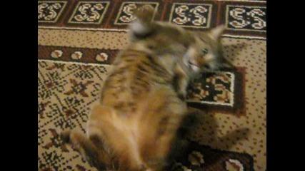 Котка, като играчка