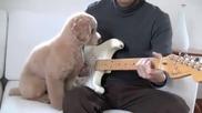 Куче-музикант! :)