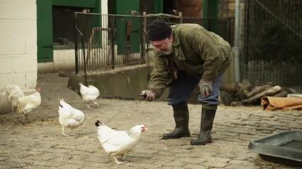Превод от животински език - Кокошка