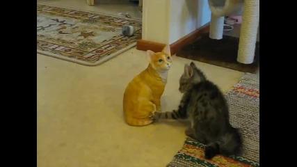 Коте се бие с порцеланово коте