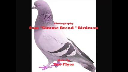 Pigeons Love Metallica